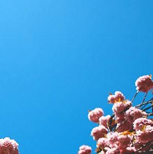 spring03